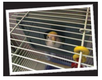Kiki's Roosting Box