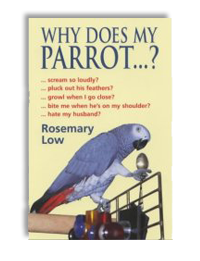 Why does my parrot?