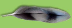 Kiki's Feather